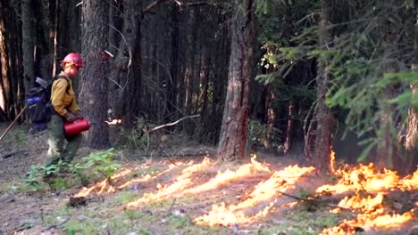 Firefighters-Performing-A-Controlled-Burn-In-A-Pine-Forest-2019