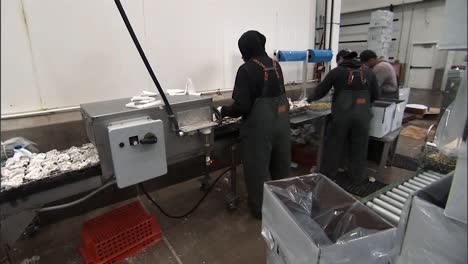 Shellfish-Are-Cleaned-And-Packaged-In-A-Us-Processing-Plant-2010S