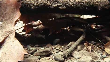 Trout-Take-Shelter-In-A-Brook-From-A-Strong-Current-Younger-Trout-Eat