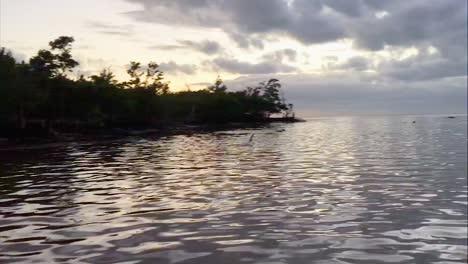 Eine-Gruppe-Von-Schwertwalen-In-Einer-Bucht-Mit-Falschen-Schwertwalen-Die-Am-Strand-Gestrandet-Sind-2010er-Jahre