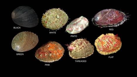 Una-Infografía-De-Las-Ocho-Especies-De-Mariscos-De-Abulón-De-California