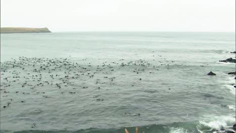 Un-Grupo-Masivo-De-Lobos-Marinos-Del-Norte-Pasan-El-Rato-En-El-Agua-Y-La-Playa-Circundante-En-Las-Islas-Pribilof