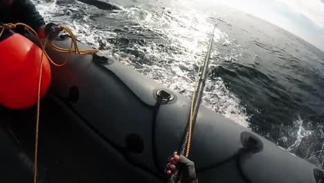 Headmount-Aufnahmen-Von-Noaa-Die-Versuchen-Einen-Schwer-Verletzten-Wal-Aus-Der-Fangausrüstung-Zu-Lösen