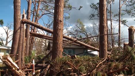 Trees-Split-Like-Twigs-In-Lynn-Haven-Florida-From-Hurricane-Michael-2018