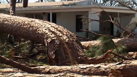 A-Tree-Split-Like-A-Twig-Fell-On-A-Home-In-Lynn-Haven-Florida-Due-To-Hurricane-Michael-2018