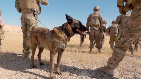 Us-Soldiers-2th-Infantry-Division-And-Military-Working-Dogs-Conduct-A-Team-Livefire-Exercise-At-Al-Asad-Air-Base-Iraq-2