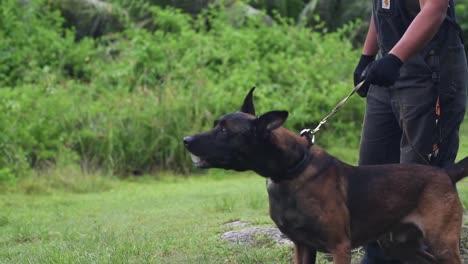 Los-Aviadores-Demuestran-Ejercicios-De-Entrenamiento-Canino-Y-Habilidades-De-Las-Fuerzas-De-Seguridad-Unidad-Canina-Andersen-Air-Force-Base-Guam-2