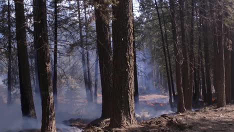 Us-Marines-Help-Fight-Creek-Fire-An-Inferno-Of-Flames-And-Raging-Wildfires-In-the-Sierra-National-Forest-1