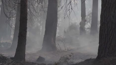 Slow-Motion-Us-Marines-Fight-Creek-Fire-An-Inferno-Of-Flames-And-Raging-Wildfires-In-the-Sierra-National-Forest