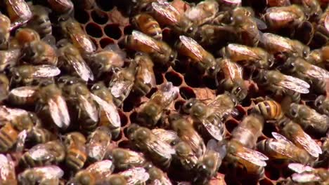A-Beekeeper-Works-With-Bees