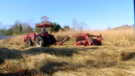 Switchgrass-Is-Grown-And-Harvested-As-A-Biomass-Feedstock