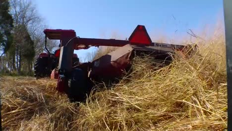 Switchgrass-Is-Grown-And-Harvested-As-A-Biomass-Feedstock-1