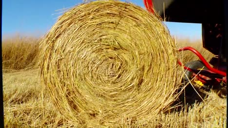 Switchgrass-Is-Grown-And-Harvested-As-A-Biomass-Feedstock-3