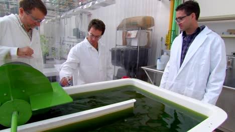 Las-Algas-Se-Desarrollan-Y-Utilizan-Como-Biocombustible