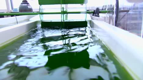 Las-Algas-Se-Desarrollan-Y-Utilizan-Como-Biocombustible-1