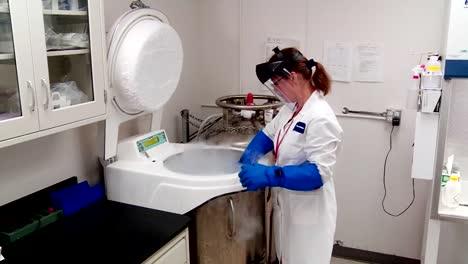 Las-Muestras-De-Algas-Congeladas-Se-Investigan-En-El-Laboratorio-
