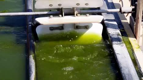 Una-Granja-De-Algas-Al-Aire-Libre-Desarrolla-Biocombustible-1