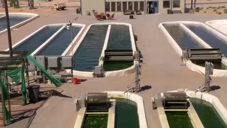Una-Granja-De-Algas-Al-Aire-Libre-Desarrolla-Biocombustible-3