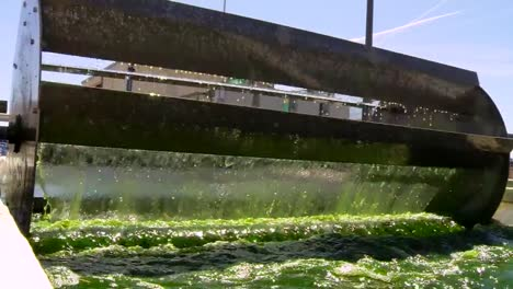 A-Large-Scale-Outdoor-Farm-Grows-Algae-For-Biofuel-3