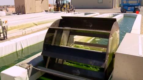 Una-Granja-De-Algas-Al-Aire-Libre-Desarrolla-Biocombustible-4