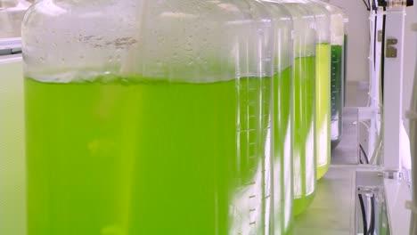 Las-Algas-Son-Desarrolladas-Y-Utilizadas-Por-Investigadores-Como-Biocombustible-5