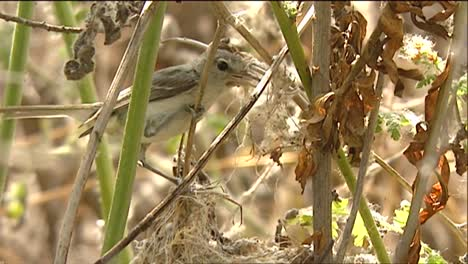 A-Sparrow-At-Its-Nest