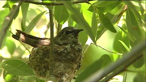 A-Bird-Sits-On-Its-Nest