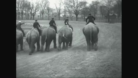 Elephants-Are-Raced-For-Sport-In-Ohio-In-1935