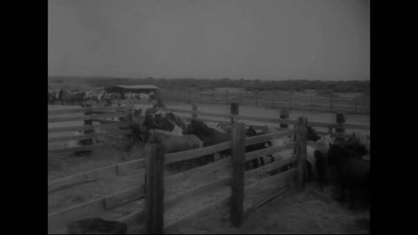 The-Wild-Horses-Of-Chincoteague-Island-Are-Sent-To-Virginia-To-Be-Sold-In-1959
