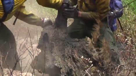 Fire-Crews-Mop-Up-After-A-Forest-Fire-3