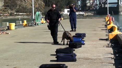 A-Police-Officer-Trains-A-Bomb-Or-Drug-Sniffing-Dog