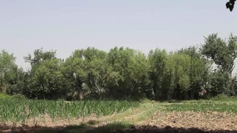Eine-Plötzliche-Explosion-Erschüttert-Eine-Baumreihe-In-Afghanistan