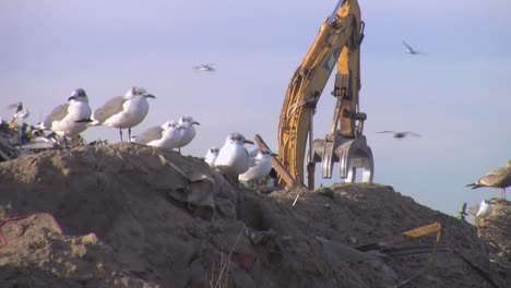 Huge-Piles-Of-Garbage-And-Rubble-Are-Bulldozed-In-A-Junkyard-Following-Hurricane-Sandy-2