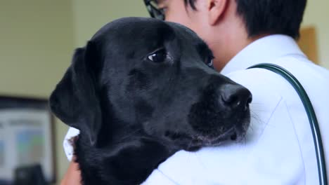 Dogs-Are-Vaccinated-Against-Disease-At-A-Veterinarians-Office-2