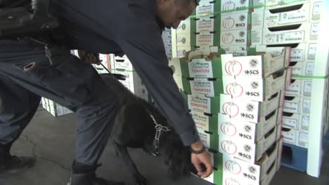 Us-Border-Patrol-Agents-Use-Dogs-To-Sniff-Out-Agricultural-Products-Crossing-The-Border-Between-The-Us-And-Mexico-1