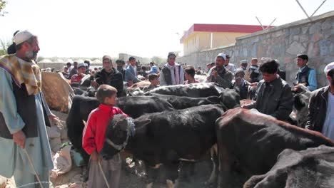 A-Cattle-Market-In-Afghanistan
