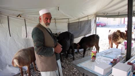 Veterinarians-Treat-Cattle-And-Sheep-In-A-Rural-Community-In-Afghanistan