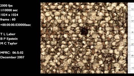 A-Forensics-Crime-Lab-Studies-A-Slow-Motion-Blood-Drop-Falling-Onto-Carpet