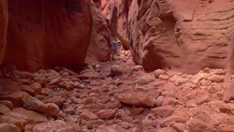 Hikers-Explore-The-Paria-Canyon-Wilderness-Of-Arizona-3