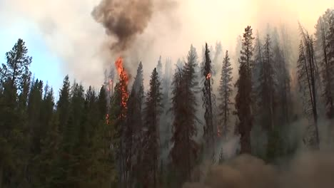 Firefighters-Set-Backfires-While-Battling-A-Wildfire-1