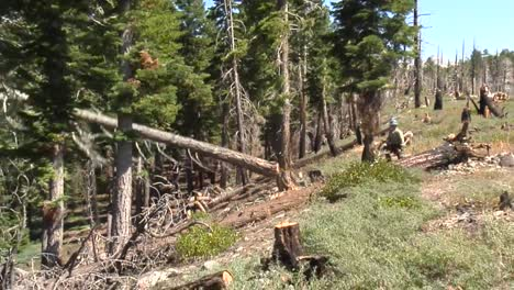 A-Forest-Service-Crew-Chops-Down-Dead-Trees