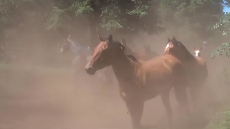 Vaqueros-Rodean-Caballos-Salvajes