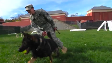 Us-Soldiers-Train-A-K9-Dog