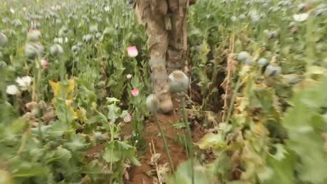 Us-And-British-Army-Troops-Engage-In-Patrol-And-Battle-As-They-Bulldoze-And-Destroy-The-Poppy-Fields-Of-Afghanistan