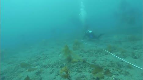 Divers-Replant-Eel-Grass-On-The-Ocean-Floor-In-The-Channel-Islands-California-2