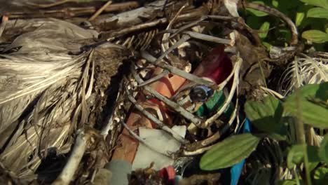 Shots-Of-Marine-Litter-Trash-Junk-And-Debris-Found-Inside-Dead-Bird-Along-Hawaii-Beaches