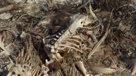 Shot-Of-Marine-Litter-Trash-Junk-And-Debris-Found-Inside-Dead-Bird-Along-Hawaii-Beaches-1
