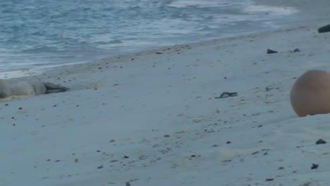 Disparo-De-Basura-Marina-Basura-Basura-Y-Escombros-Encontrados-A-Lo-Largo-De-Las-Playas-De-Hawaii