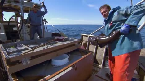 Black-Cod-Fishermen-On-The-High-Seas-2