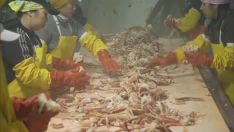 Scenes-Inside-A-Crab-Factory